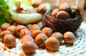 First Hazelnut Festival Wraps Up In Azerbaijan's Zaqatala