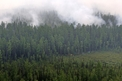 With Siberian Forests In Jeopardy, Moscow Puts Pressure On Beijing